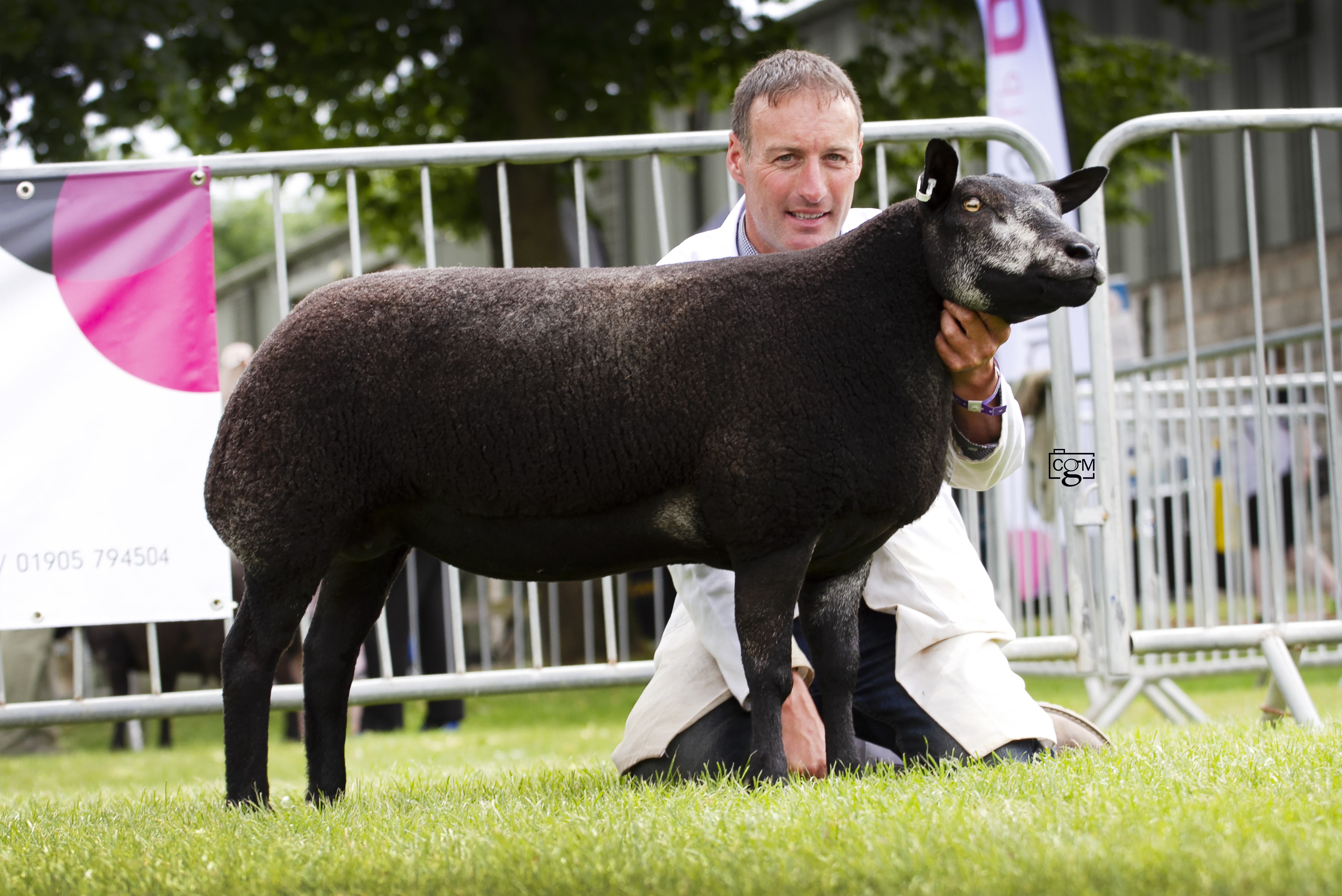 Blue-Texel-297-shearling-ewe-overall-champion-9729