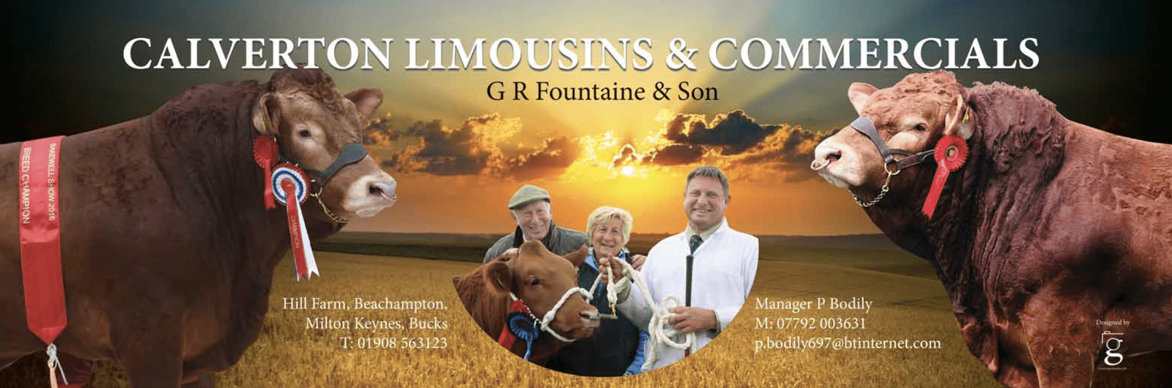 Banner design for Calverton Limousins and Show Cattle