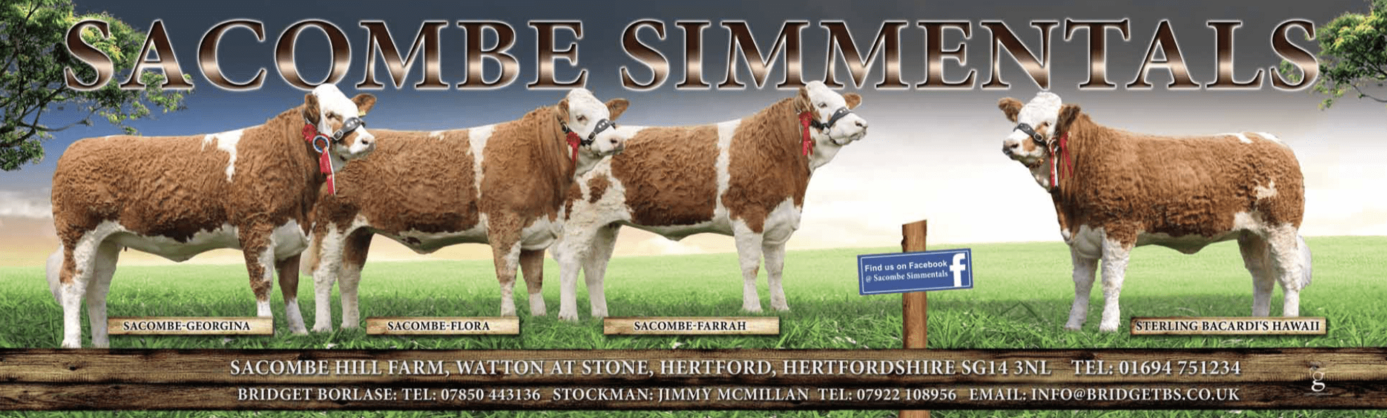 Banner design for Sacombe Simmentals