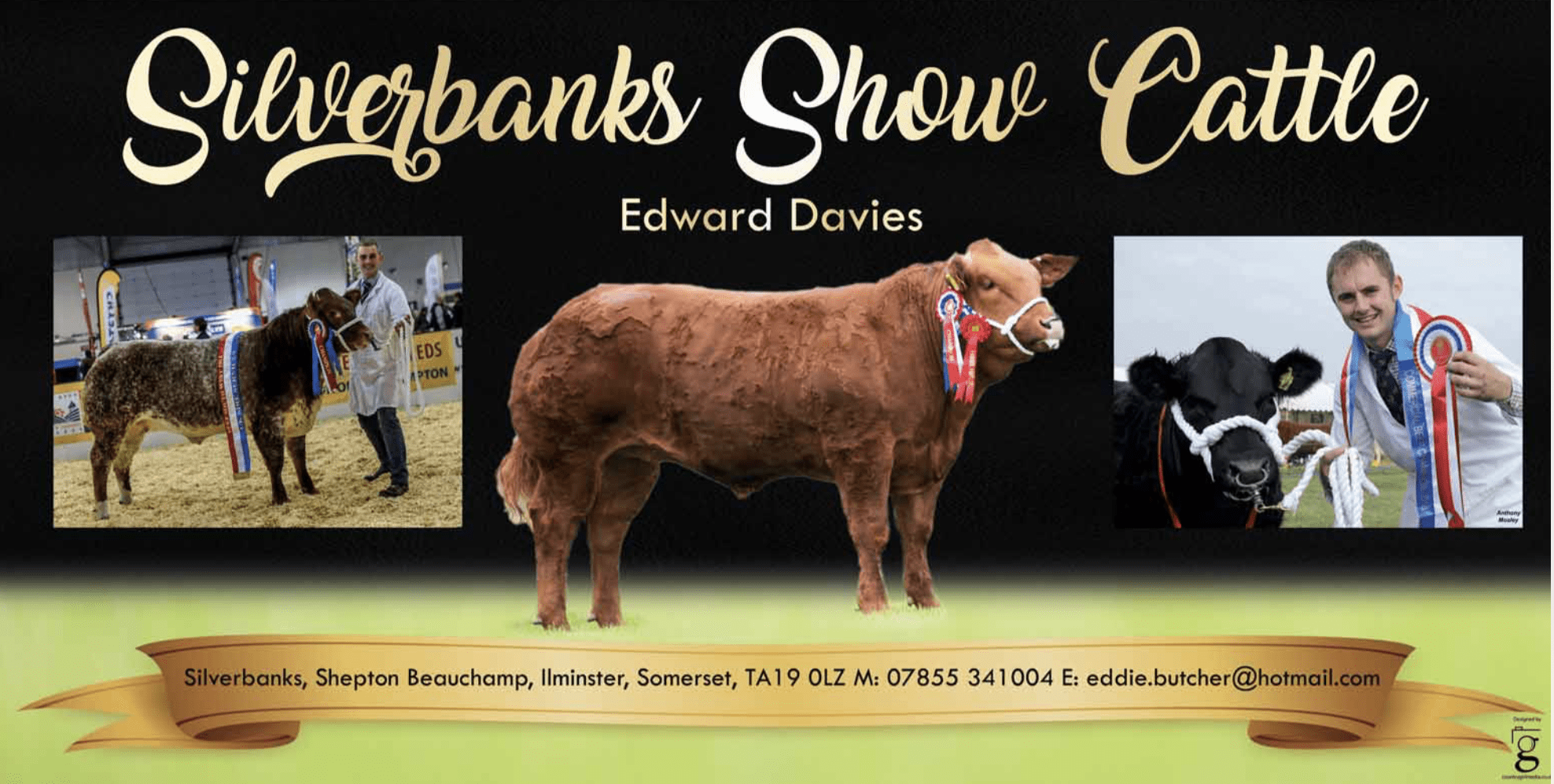 Banner design for Silverbanks Show Cattle