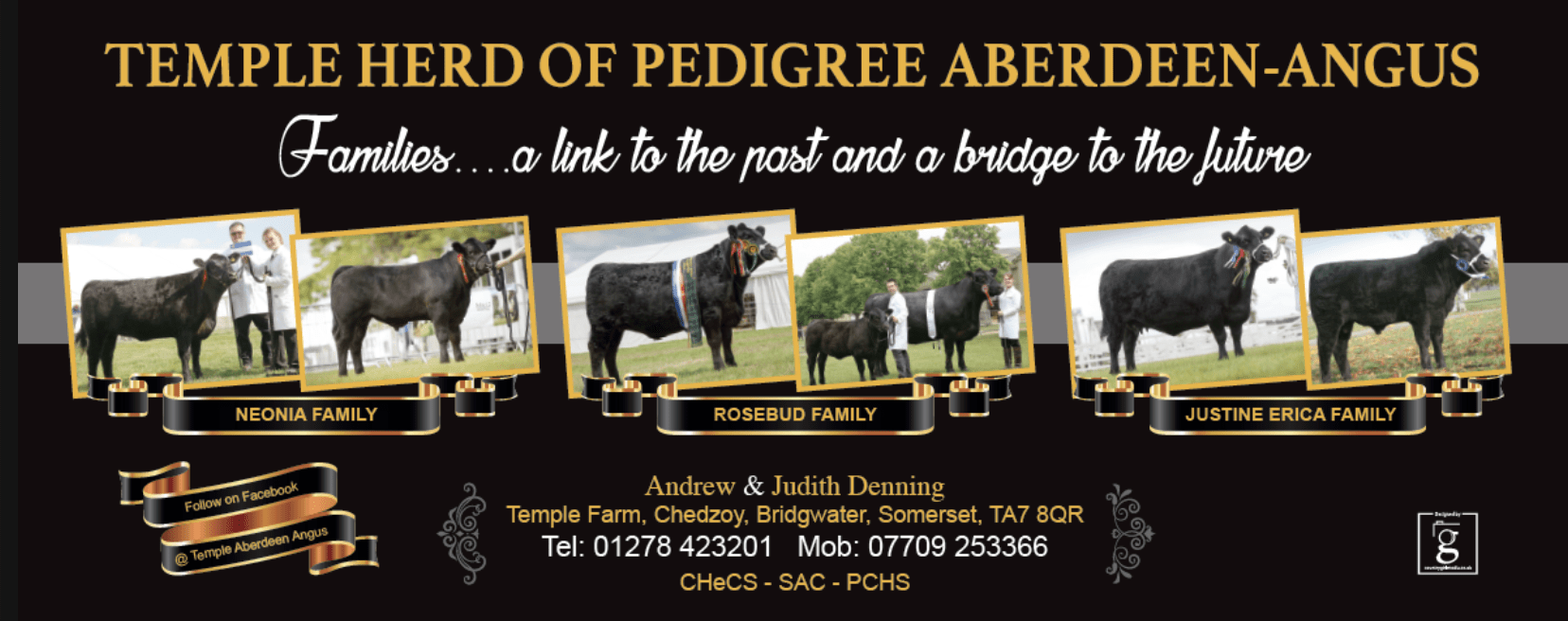 Banner design for Temple Angus