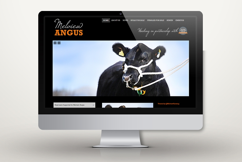 Melview Angus - http://melviewangus.co.uk/