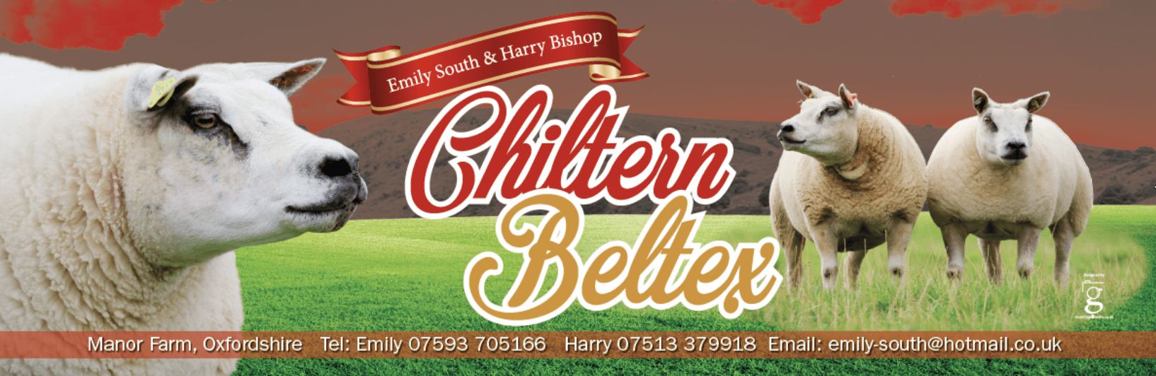 Photography and banner design for Chiltern Beltex