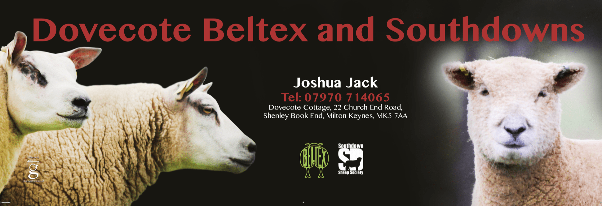 Photography and banner design for Dovecote Beltex and Southdowns