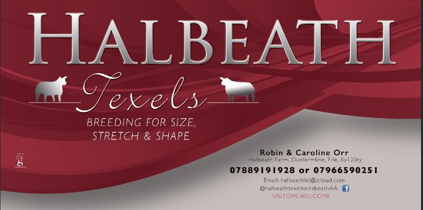 Banner design Halbeath Texels