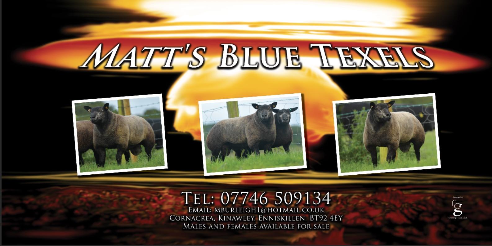 Banner Design Matt's Blue Texels