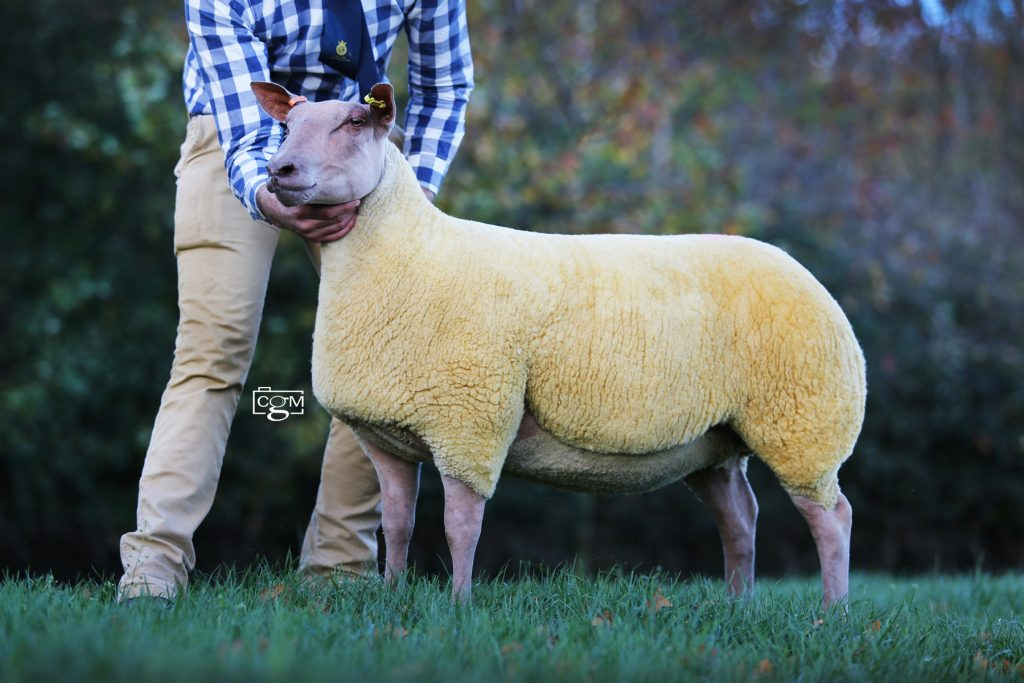 Knighton-Wench-Lot132-6000gns-E93A4588